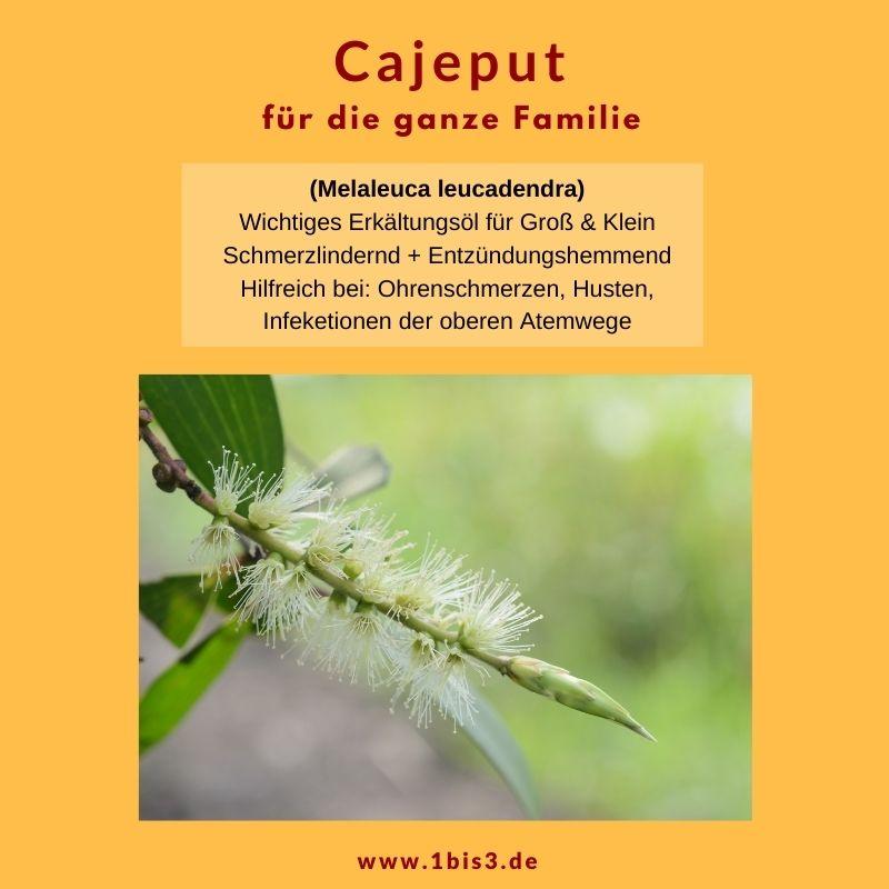 Cajeput - Eigenschaften des ätherischen Öls