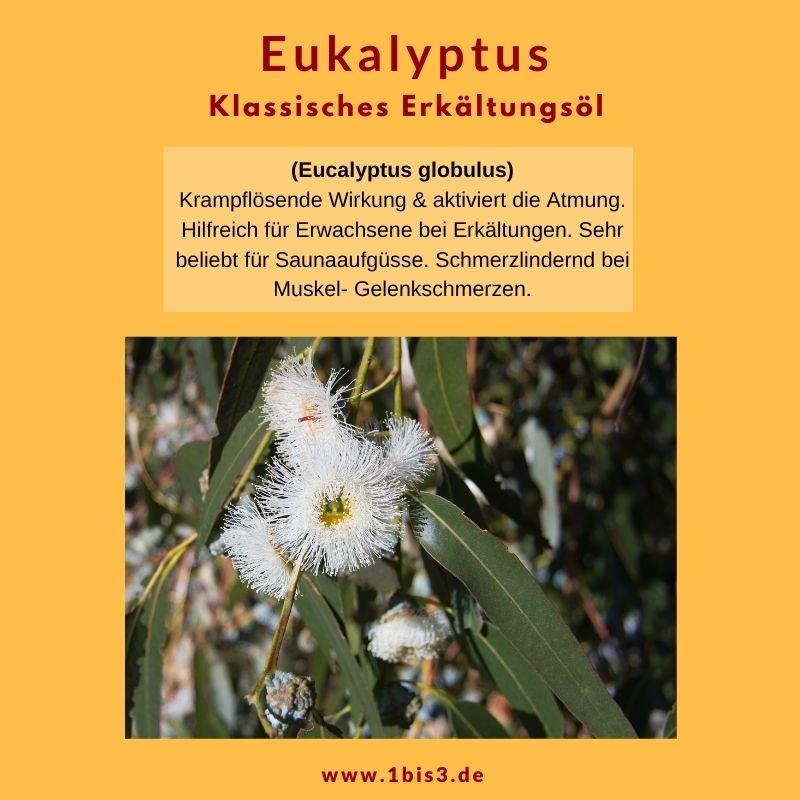 Eukalyptus globolus ätherisches Öl