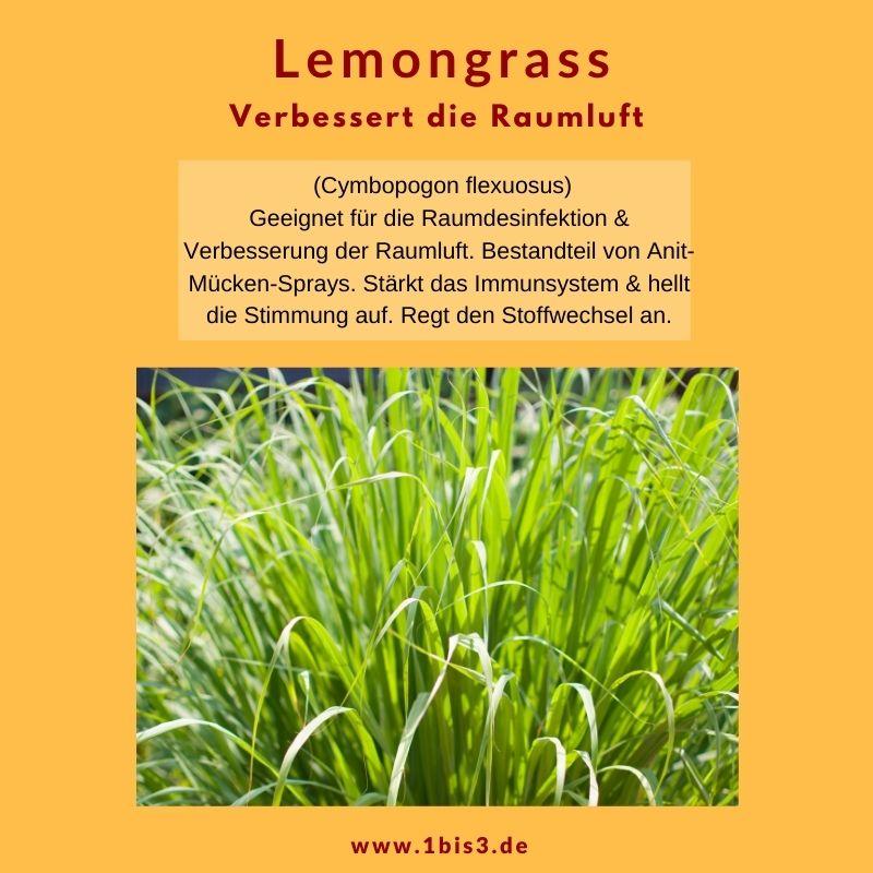 Lemongras ätherisches Öl