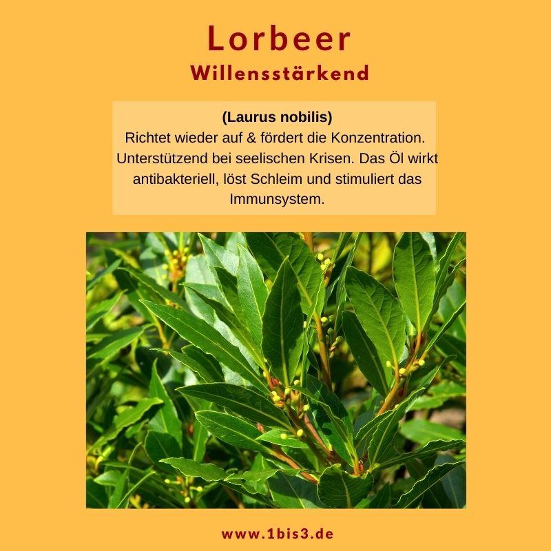 Lorbeer ätherisches Öl 5 ml