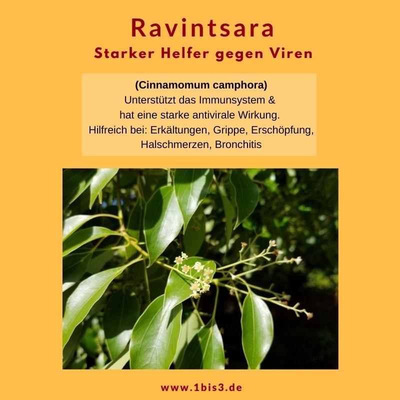 Ravintsara ätherisches Öl