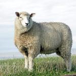 Einlagen Wolle & Seide