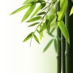 Einlagen Bambusviskose