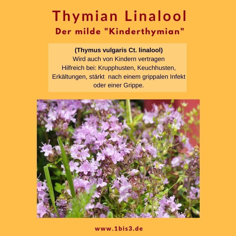 Thymian Linalool bio (5 ml)
