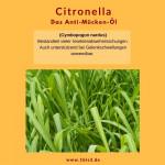 Citronella bio (5 ml)