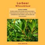Lorbeerblätter bio (5 ml)