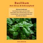 Basilikum bio (5 ml)